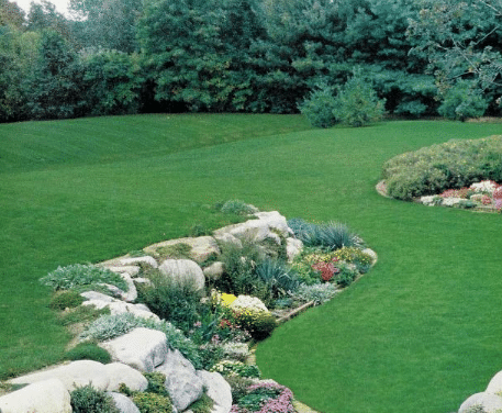 Lawn Care In Madison Wisconsin